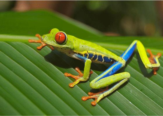 frog-frosch-flashcards-allaboutdeutsch