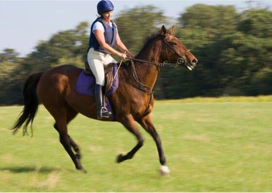 horseriding-pferdereiten-flashcards-allaboutdeutsch