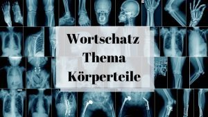 Koerperteile – 23 Free Flashcards for Body Parts in German